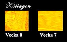 Skärmavbild 2013-11-30 kl. 21.36.57