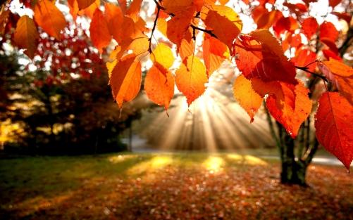 shining-fall